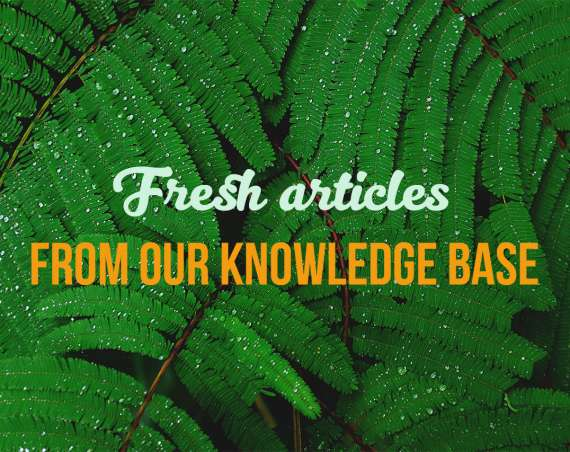 Fresh articles from our knowledge base
